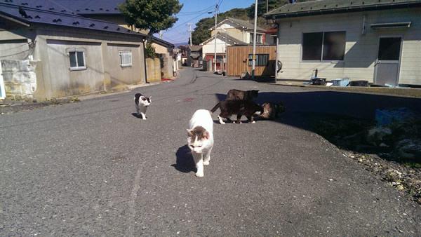 田代島 猫島 宮城県